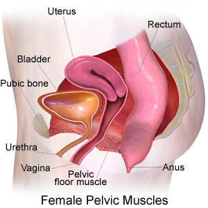 Pain in the vaginal area during pregnancy